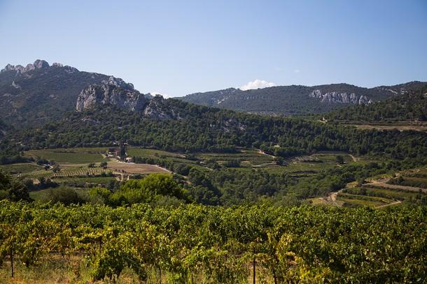Olive-Trees-Avignon