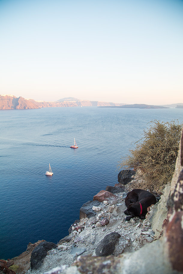 Dog-enjoying-view-in-Oia