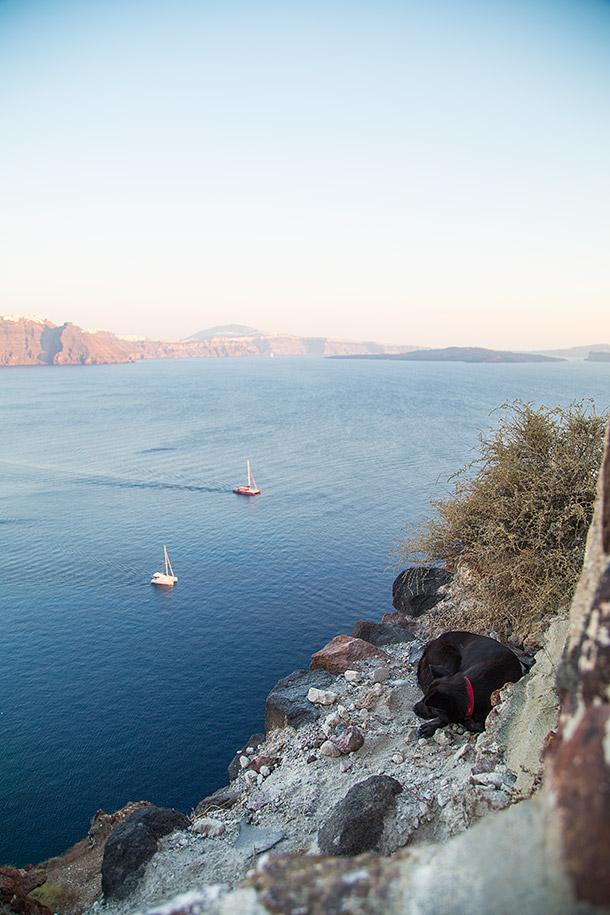 Dog-enjoying-view-in-Oia