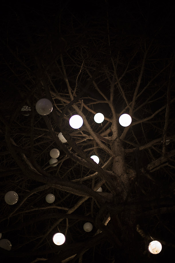 Tree-Mo-mo