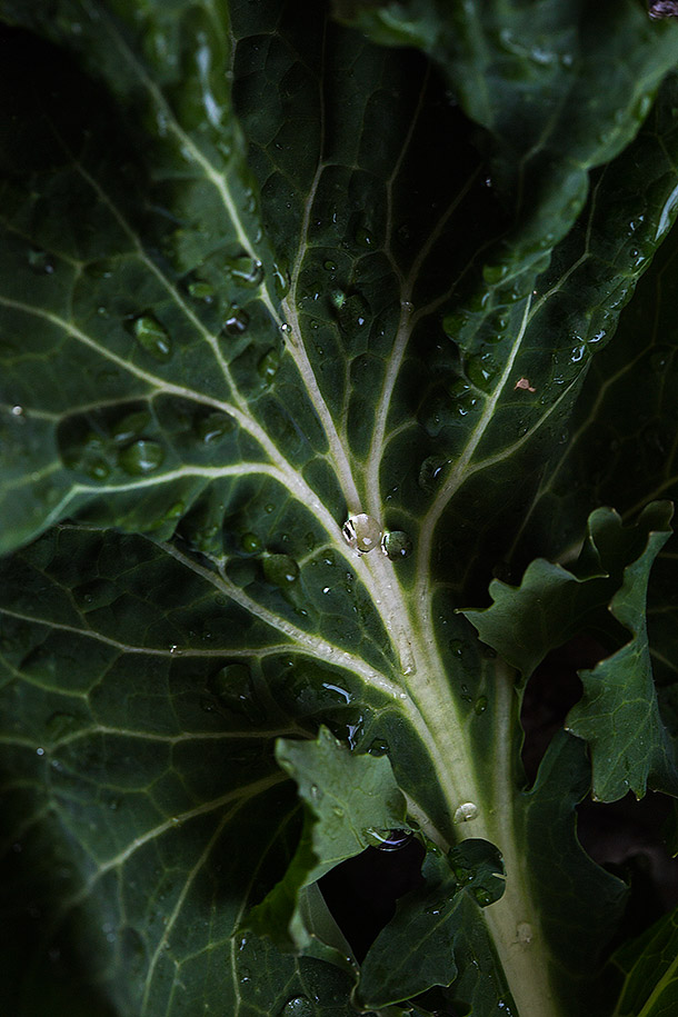 Washed-kale